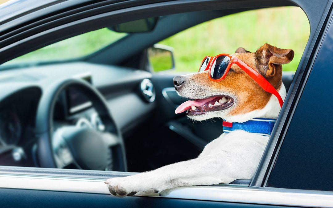 #24 – Distintas figuras en el contrato de seguro del coche (3)